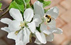 Reportage: De bor i et glashus Ecology, Plants, Glass House, Home, Plant, Planets, Environmental Science