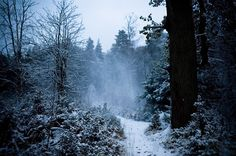Winter Blues pictures and quotes Snowy Woods, Snowy Forest, Blue Forest, Winter Trees, Winter Holidays, Lucky Colour, Blue Pictures, Blue Wood, Mythical Creatures