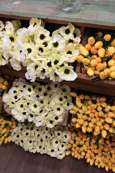 Fake Flower DIY Projects – You need DIY flower ideas when you want to turn old stuff around you into the beautiful craft. Flowers are versatile to use, for example, . Read MoreFake Flower DIY Projects That Will Last You Through This Spring And Beyond Diy Flower Boxes, Paper Flowers Diy, Flower Pots, Flower Diy, Flower Ideas, Diy Paper, Paper Crafts, Types Of Flowers, Fake Flowers