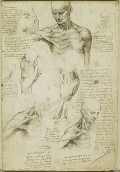 Leonardo da Vinci: Recto: The superficial anatomy of the shoulder and neck. Verso: The muscles of the shoulder (Da Vinci (artist) Creation Date: Materials: Pen and ink with wash, over black chalk Dimensions: x cm Anatomy Head, Anatomy Drawing, Anatomy Study, Anatomy Art, Human Anatomy, Wall Canvas, Canvas Art, Canvas Prints, Leonardo Da Vinci Dibujos