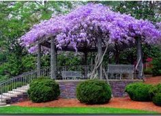 The Urban Farm & Garden  A beautiful stand of Wisteria makes a fragrant canopy for a Gazebo  From: Flower Story
