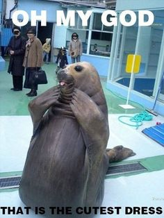 Temple of Cute Animals - Funny Animal Photos, Videos, and Gifs - Part 7 (seal,funny)