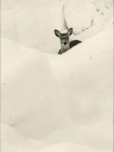 masao yamamoto | deer