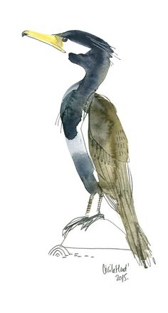 cormoran, Cécile Hudrisier Bird Drawings, Animal Drawings, Pencil Drawings, Bird Outline, Shadow Painting, Cecile, Watercolour Tutorials, Watercolor Bird, Drawing For Kids