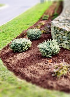 Mulched walkway and many other landscaping ideas