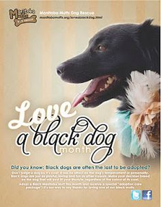 Manitoba Mutts Dog Rescue is a non-profit dog adoption group based out of Winnipeg, Manitoba, Canada. Mutt Dog, Dog Cat, I Love Dogs, Puppy Love, Black Dog Syndrome, Mans Best Friend, Best Friends, Black Dogs, Labradors