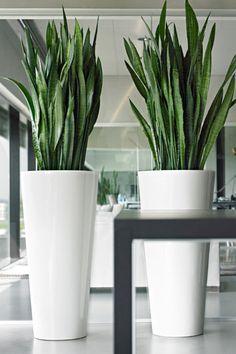 Afbeeldingsresultaat voor plantenbak roomdivider