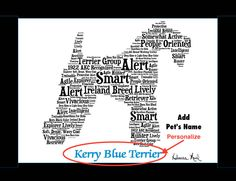Traits of the Kerry Blue Terrier The Kerry Blue Terrier originated in the south and west of Ireland, first gaining notice in the Ring of Kerry. Here the dog had been known for at least a century as a