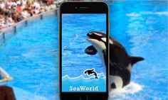 Custom Snapchat geofilter for SeaWorld, Orlanda.