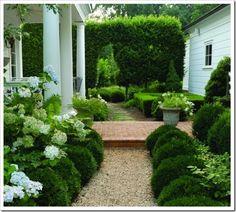 Green Garden with touches of white. My secret garden. Boxwood Garden, Boxwood Hedge, Hydrangea Garden, Limelight Hydrangea, Garden Cottage, White Gardens, Small Gardens, Garden Paths, Gravel Garden