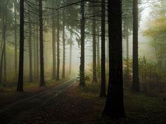 *** nebelweg ***by Mc Toni (Toni Großmann) in fotocommunity