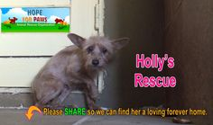 Meet Molly. Rescuing a terrified, abandoned dog. The transformation is awesome. Please support and give to hopeforpaws.org
