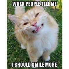 I got to know that our cats can develop the periodontal disease and run the risk of needing all their teeth removed as they get older if their teeth is not brushed regularly. I saw a video of a Vet in this article on how to brush cats teeth Funny Animal Memes, Animal Quotes, Funny Animal Pictures, Funny Animals, Cat Having Kittens, Cats And Kittens, Silly Cats, Funny Cats, Orange And White Cat