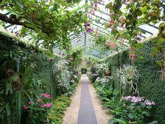 Interior of Laeken Royal Greenhouses - Wikimedia Commons