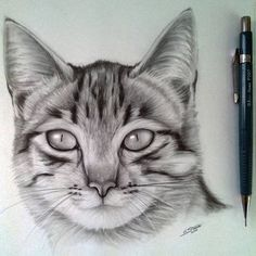 Cat Drawing by LethalChris - Drawing / Art stuff - Katzen Realistic Animal Drawings, Pencil Art Drawings, Cool Art Drawings, Art Drawings Sketches, Drawing Art, Cat Drawing Tutorial, Cute Cat Drawing, Drawing Tutorials, Drawing Techniques