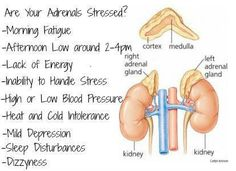 #adrenalfatigue got you down #nutmeg #endoflex might help  http://ylscents.com/SeaSpiritSelfHealing/