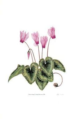 FLORES=figuras de decoupage 9 - Mary. XVIII - Álbumes web de Picasa