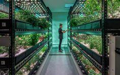 Indoor Farm in Manhattan