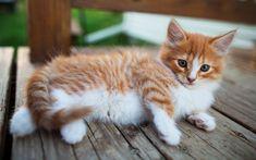 Adorable Little Fuzz Ball! White Fluffy Kittens, Fluffy Cat, White Cats, Fluffy Animals, Cute Animals, Ginger Kitten, Cat Photography, Animal Wallpaper, Beautiful Cats