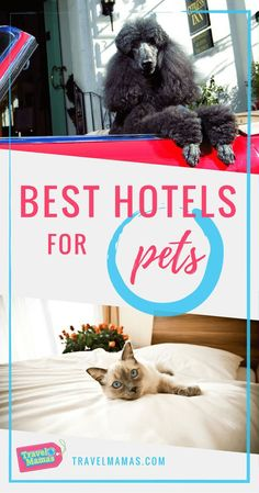 Best Hotels for Pets for All Sorts of Vacation Styles Going on a family shouldn't have to mean leaving a beloved family member at home. Find out the best pet-friendly and to accommodate your Family Vacation Destinations, Great Vacations, Romantic Vacations, Romantic Getaways, Travel Destinations, Romantic Destinations, Travel Toys, Dog Travel, Travel Usa