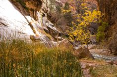 Epic Hikes of Zion - Angels Landing and The Narrows — Travel Is Beautiful The Narrows Zion, Before Us, Hiking, Angel, Mountains, Travel, Beautiful, Walks, Viajes