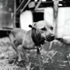 We are Dogs! Tipo de evento:Exposiciones Técnica:Fotografía Artistas/s: -Jaka Babnik Comisario/Curator: -Adonay Bermúdez Fecha de inauguración:22 Mayo de 2013 Fecha de finalización:15 Junio de 2013 Organiza y/o se celebra: -Espai b