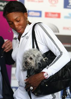 Tennis player Venus Williams and her dog- my idol! Lawn Tennis, Sport Tennis, Celebrity Dogs, Wonder Twins, Yankees News, Tennis Fashion, Tennis Stars, Tennis Players, Mans Best Friend