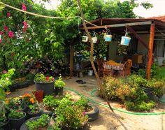 A pretty village house garden-Foto Tamar Benbeset -Şirin bir köy evi bahçesi-