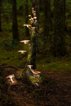 Forest Enchanted — theendlessforest: By the Mushroom Light by Jarrett Porst.---- writing inspirationThe Forest Enchanted — theendlessforest: By the Mushroom Light by Jarrett Porst. Fae Aesthetic, Mushroom Lights, Magical Forest, Forest Light, The Enchanted Forest, Enchanted Kingdom, Jolie Photo, Fantasy World, Goblin