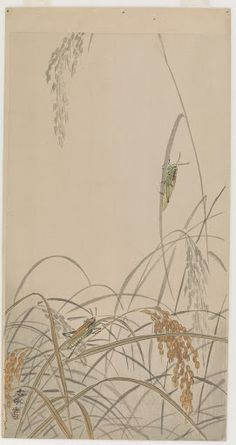 6e82ef142473 Grasshoppers on rice plants - Artist  Ohara Koson