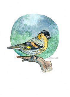 Siskin watercolor by Anastasy Siilin