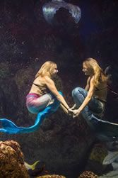 Mystic Mermaids®  Mermaids… to most, they're the subject of myth and legend, but at Downtown Denver Aquarium we've got our own sea of mermaids!