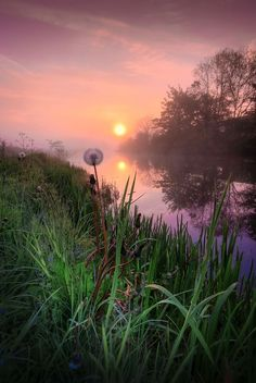 Dandelion Sunrise..| David Mould