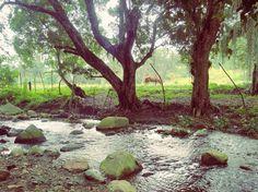 Countryside, Campo, Nature, Naturaleza, Trees, Árboles, River, Río, Barbosa, Antioquia, Colombia