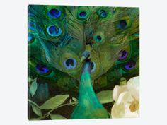 """Aqua Peacock by Color Bakery Canvas Print 26"""" L x 26"""" H x 0.75"""" D"""