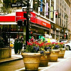 Spring in the Big Apple
