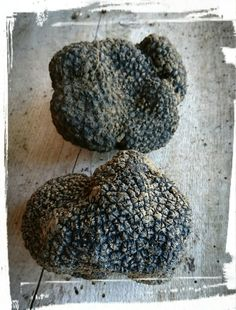 Tartufo nero estivo Black summer truffle italian truffle #rioverdetartufi