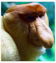 Animals With Weird Noses 11