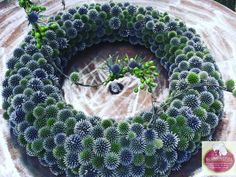 Circular mono wreath with blue thistles floristry # dignified Floral Bouquets, Floral Wreath, Bouquet Flowers, Noel Christmas, Christmas Wreaths, Fleurs Diy, Deco Originale, Diy Projects For Beginners, Watercolor Flowers