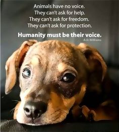 Humanity must be their voice.