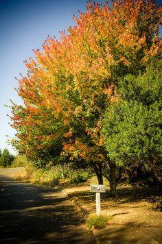 Last nice day of Autumn?