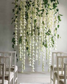 Floral Backdrop - I think these flowers are White Brugmansia (Angel's Trumpet)
