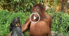 Everyone onthe Planet Needs toSee This Little Video