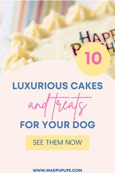 Whether it's your dogs 1st birthday or their 10th (yay!) they want to be spoiled just as much as we want to spoil them. Spoil…smother…same thing right? So if you want to let your pup live it up for his/her big day, check out the following inspiration pictures to recreate yourself or have someone else recreate for you. | dog mom | dog lover | dog birthday cake | diy dog birthday cake | diy dog treats | dog party | dog meme | cute dogs | dog party |