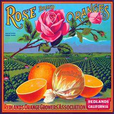 Citrus Fruit Vintage Advertising Labels Posters Art Prints