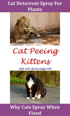 Best 25 Urine Smells Ideas On Pinterest Cat Urine Cat