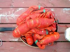 How to cook the perfect Nova Scotia lobster!