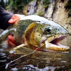 Beautiful trout!