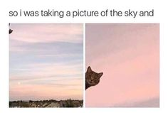 for funny vid and pictures memes every day or more memes Funny Animal Memes, Cat Memes, Funny Cats, Funny Animals, Cute Animals, Funny Quotes, Memes Humor, Cats Tumblr, Tumblr Funny