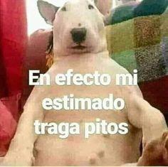 chinga tu madre lee puto >:v # Humor # amreading # books # wattpad Pingu Memes, Dankest Memes, Jokes, Hello Memes, Reaction Face, Little Memes, Mood Pics, Spanish Memes, Aesthetic Images